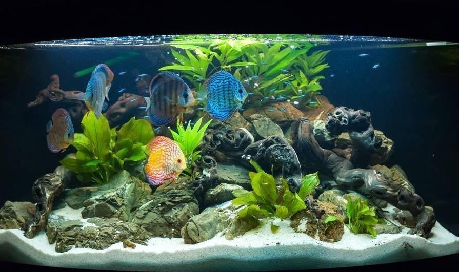 观赏鱼水族箱如何清理?水族箱清洁步骤